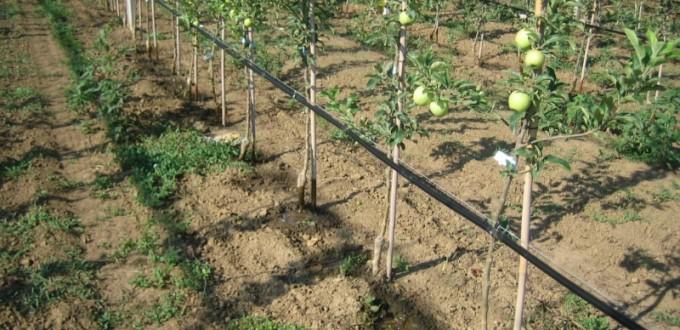 navodnjavanje vocnjaka
